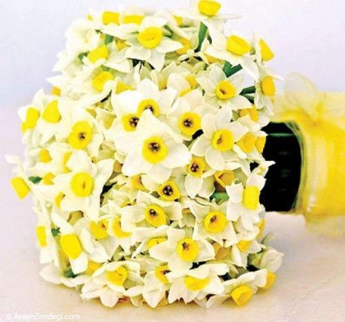 فوت و فنهایی برای نگهداری گل نرگس
